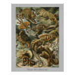 Lizards - Ernst Haeckel Poster