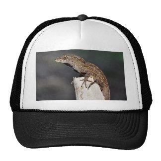 Lizards Lizards Lizards Hats