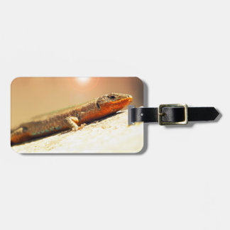 Lizart heat bag tag