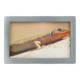 Lizart heat belt buckles