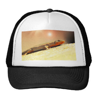 Lizart heat cap