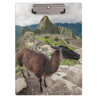 Llama At Machu Picchu, Aguas Calientes, Peru Clipboard