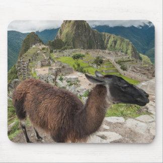 Llama At Machu Picchu, Aguas Calientes, Peru Mouse Mat