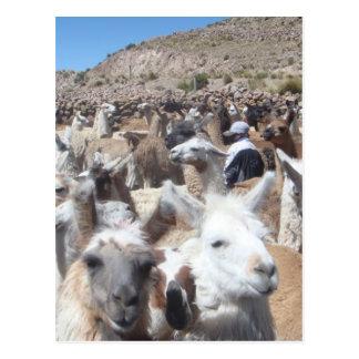 Llama Disco Postcard