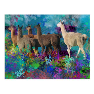 Llama Five Walk in Fantasy Land for Camelids Postcard