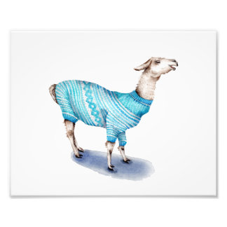 Llama in Blue Sweater Photo Art