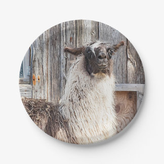 Llama in front of a barn 7 inch paper plate