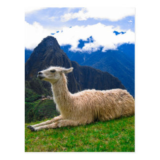 LLama in Machu Picchu Postcard