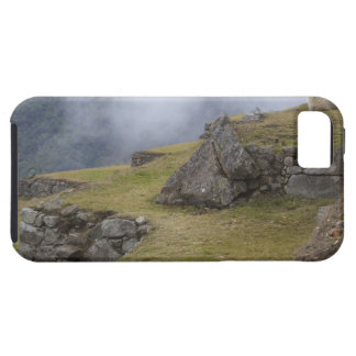 Llama (Lama glama) amongst the Inca terraces at iPhone 5 Covers
