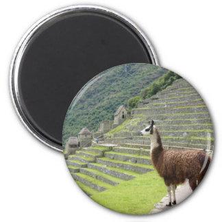 llama looks 6 cm round magnet