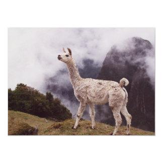 Llama Machu Picchu, Peru 14 Cm X 19 Cm Invitation Card