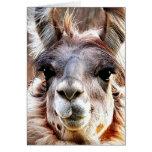 Llama Note Card