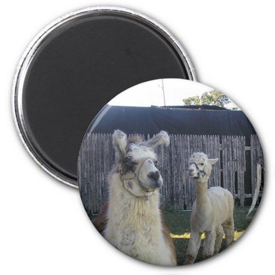 Llama Pals 6 Cm Round Magnet