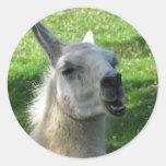 Llama Photograph Round Sticker