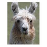Llama Post Cards