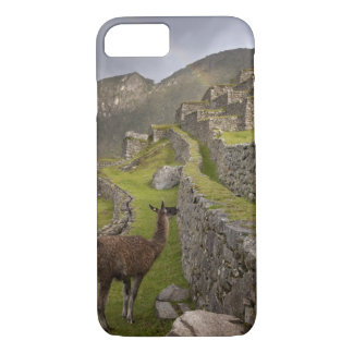 Llama stands on agricultural terraces with iPhone 8/7 case