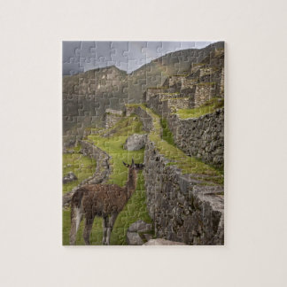 Llama stands on agricultural terraces with jigsaw puzzle