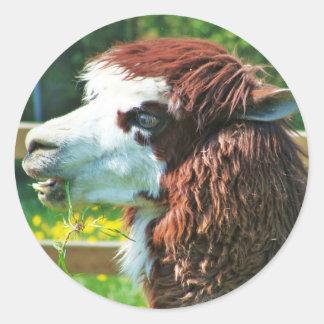 Llama - Sticker