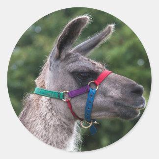 Llama Superiority Classic Round Sticker