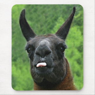 Llama with Attitude - Sticking out Tongue Photo Mouse Mat