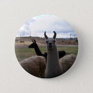 Llamas 6 Cm Round Badge