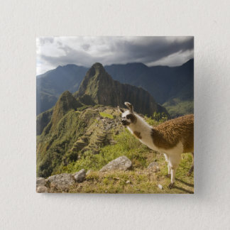 LLamas and an over look of Machu Picchu, 15 Cm Square Badge
