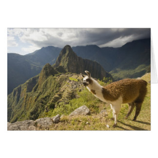LLamas and an over look of Machu Picchu, Greeting Card