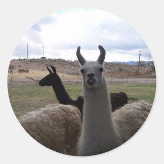 Llamas Classic Round Sticker