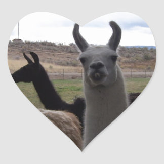 Llamas Heart Sticker