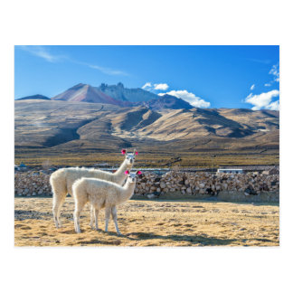 Llamitas in the Salt flat of Uyuni, Bolivia Postcard
