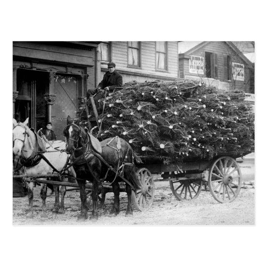 Load of Xmas Trees, 1910 Postcard