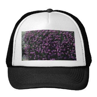 Lobelia bush mesh hats
