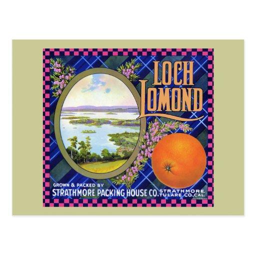 Loch Lomond Orange Flower Postcard