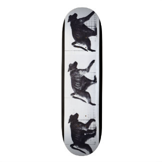 LOCO MOTION Skateboard: Baboon Walking 21.6 Cm Skateboard Deck
