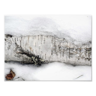 Log Peeking Out of Snow Photo Print