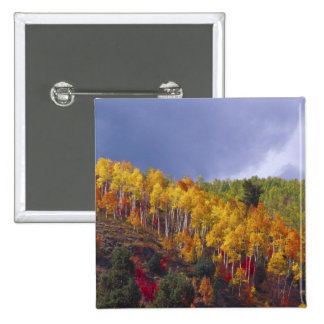 Logan Canyon in Utah in autumn with passing 15 Cm Square Badge