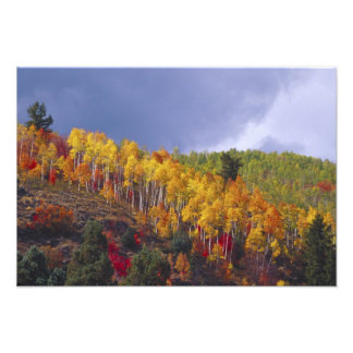 Logan Canyon in Utah in autumn with passing Photo Print