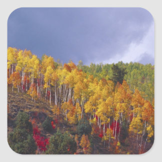 Logan Canyon in Utah in autumn with passing Square Sticker