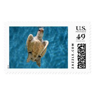 Loggerhead Sea Turtle Postage Stamps