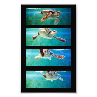 Loggerhead Sea Turtle Study Photo