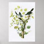 Loggerhead Shrike John Audubon Birds of America Poster
