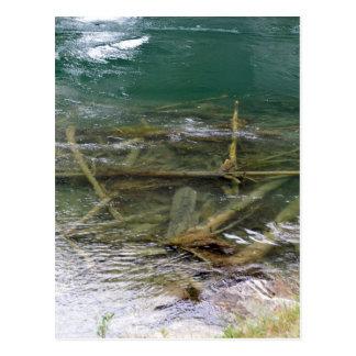 Logs in the Lake Postcard