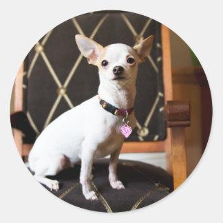 Lola Oh Yeah Chihuahua Sticker