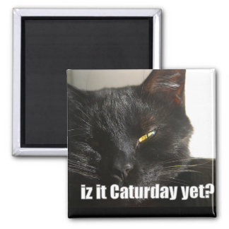 LOLCat 2 Square Magnet