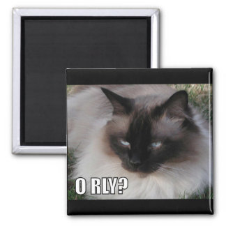 LOLCat 4 Square Magnet