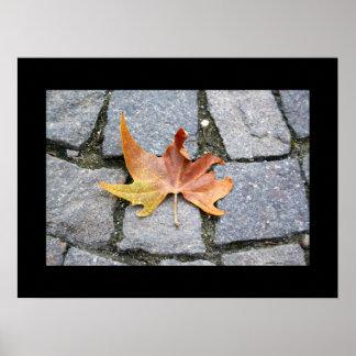 London Plane Tree Leaf Poster