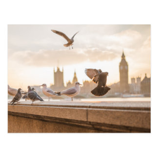 London seagulls postcard