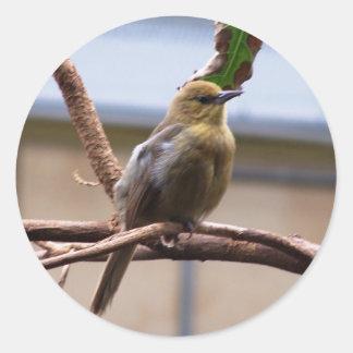 London Zoo bird Classic Round Sticker