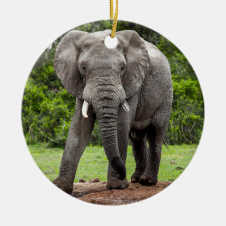 Lone African elephant bull. Christmas Ornament