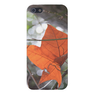 Lone Autumn Leaf in the Sunlight, iPhone5 Cover For iPhone 5
